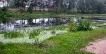 А речка-то с ужиками.... проверили. И вода в ней ключевая. В жару самое ТО!