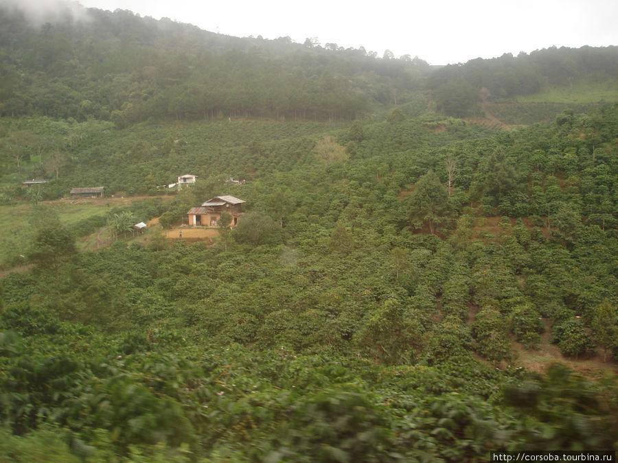 Кофейные плантации, владельцы которых живут богато. Дома такие роскошные! Кстати, знаменитый кофе ЛЮВАК, сначала съеденный одноименным зверьком, ферментированный в его пищеварительном тракте и исторгнутый с экскрементами, во Вьетнаме совсем недорогой! Эх, как я напоследок витиевато высказалась! :)))