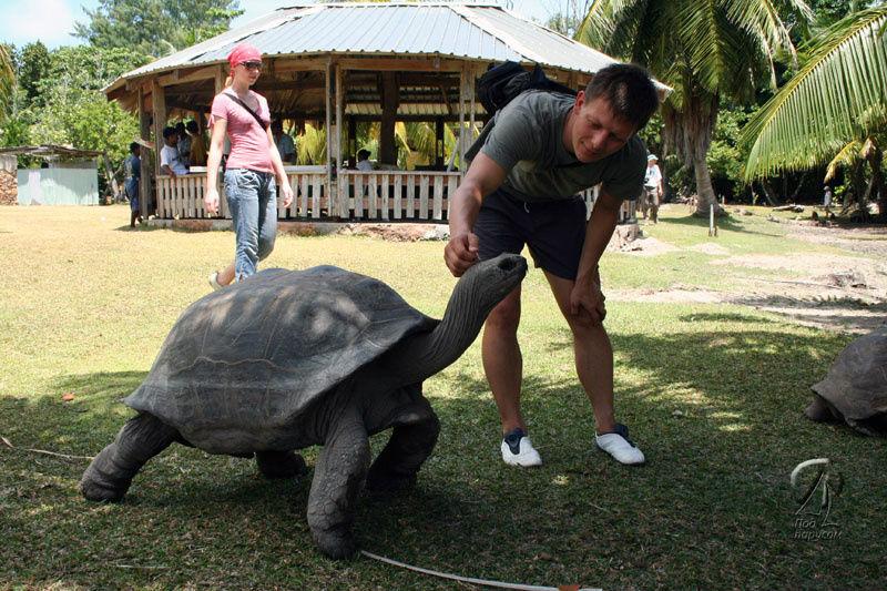 Гигантские черепахи не пр