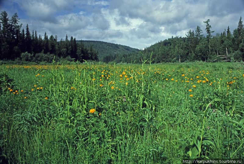 Оранжево-зелёные поляны