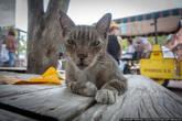 Самая главная достопримечательность — местные коты. Коты как коты, но у них шесть пальцев! И таких больше нет нигде в мире!