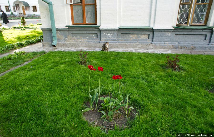Цветы и кошки.