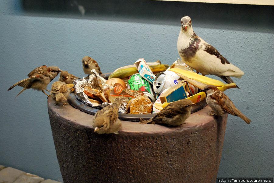 Видимо в Берлине полная урна мусора редкость, поэтому в зале с птицами есть такой макет