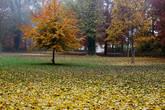 В старом парке.