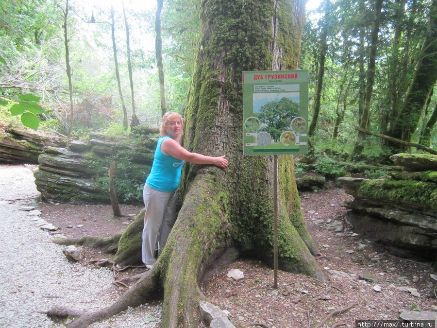 Это дерево увидела из -за поворота. Мне почему то захотелось обнять его. И как я удивилась, когда услышала рассказ про него. Да, это дерево обнимают все, кто проходит мимо.Загадывают желание и бросают деньги(мелочь) к подножию