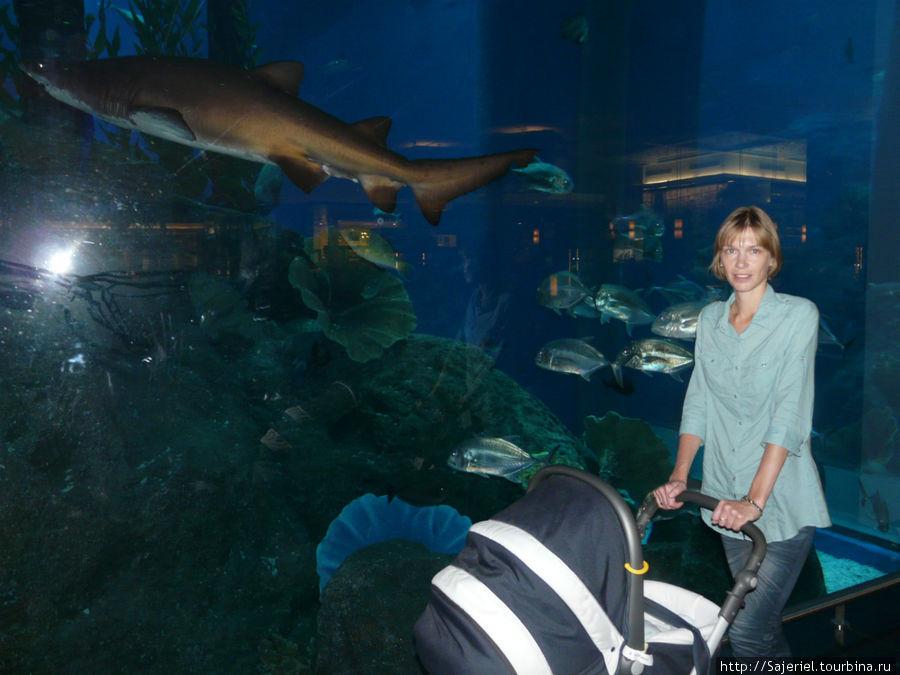 В Дубайском океанариуме