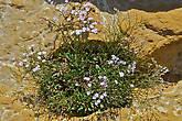 растения удивительные существа — обладают способностью приспособиться к любым рельефам. вот например идеальная естественная ваза...