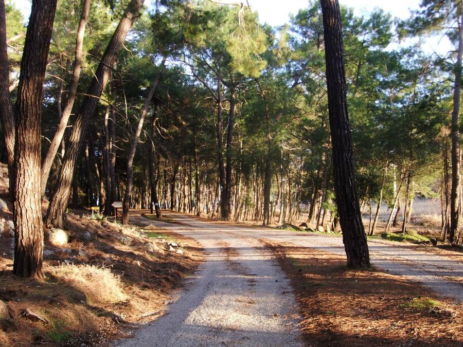дорога от кассы в Фаселис