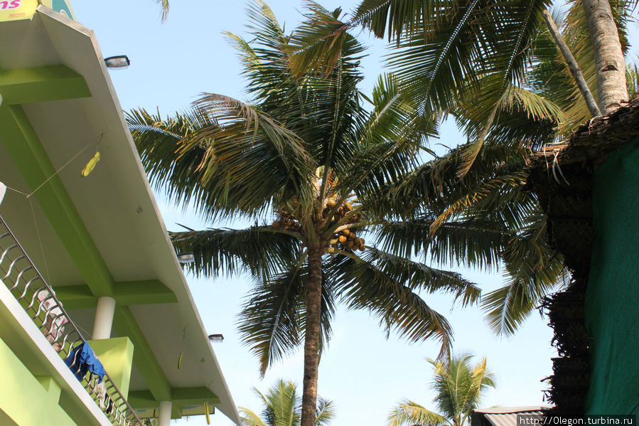Вокруг высокие пальмы