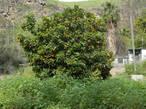 Ухоженная территория радует глаз зеленью южных деревьев