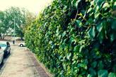 В Гвадалахаре почти все заборы хоть и двухметровые, но зато зеленые.