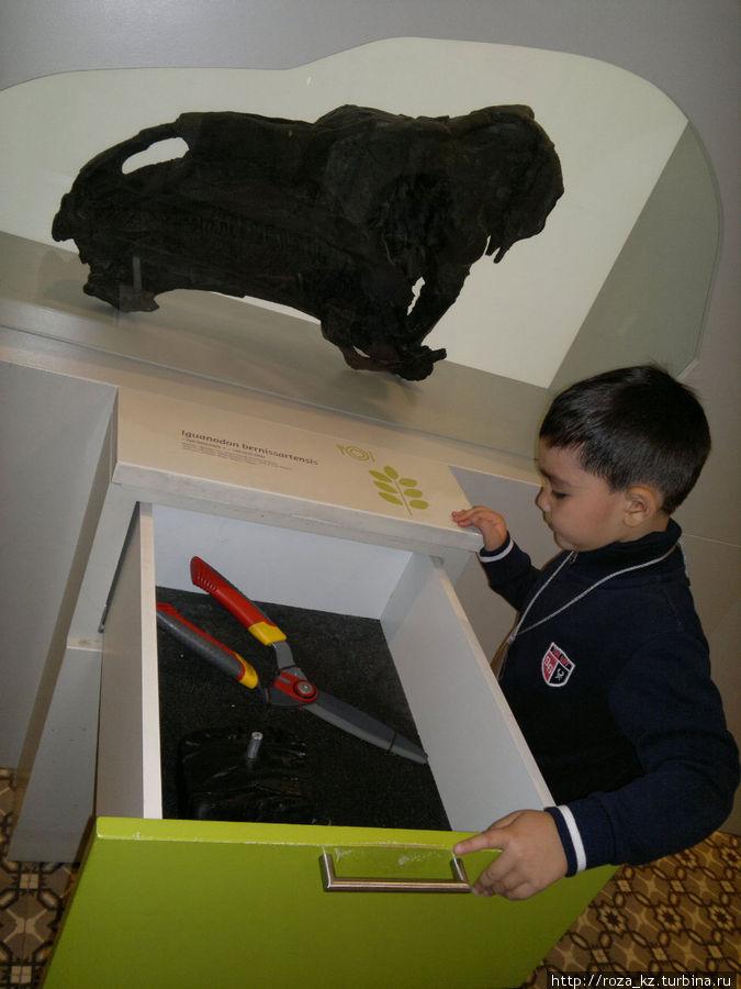 в ящике макет челюсти доисторического животного и на что похож принцип ее работы