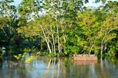 Некоторых особо непредусмотрительных и вовсе скрыло с головой. Остается только надеяться, что амазонские жители давно уже сжились с этой напастью и обзавелись запасными домиками в местах посуше..