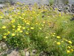 Весной вся земля цветет -до самой кромки озера