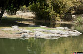 Крокодиловый берег