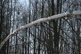Последствие ледяного дождя 2010 года