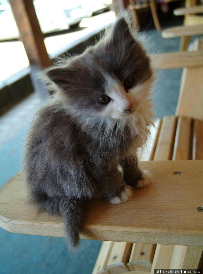 А этот котёнок был любопытный и решил посмотреть, чего я уплетаю за столом...