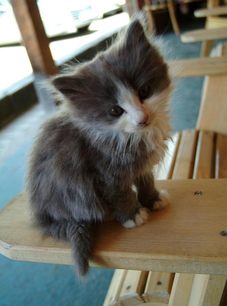 А этот котёнок был любопы