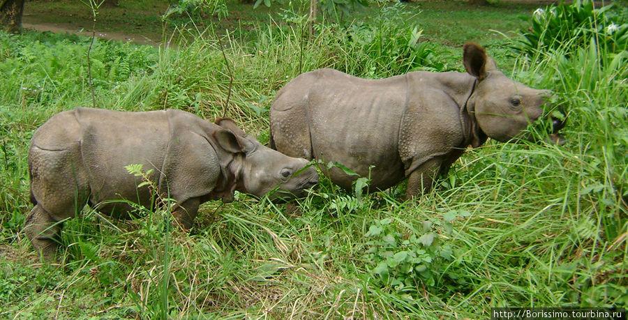 А этих симпатичных малышей спасли от голодной смерти. Их родители погибли от рук браконьеров, и теперь они живут у людей. Когда вырастут — их отправят в зоопарк. Может быть, к нам в Ригу?