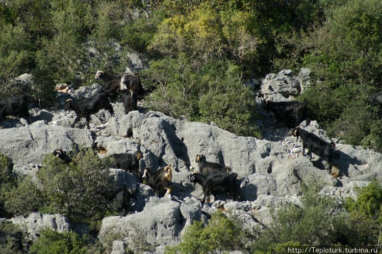 Козы в горах