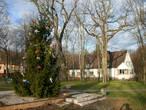 зеленая трава, солнечная погода и новогодняя ель — великолепное сочетание!