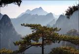 Большая часть гор покрыты необычными соснами. От обычных они отличаются тремя признаками: растут на высоте свыше 800 м над уровнем моря, способны держаться на гранитных стенах горных расщелин, отличаются многообразием форм.
