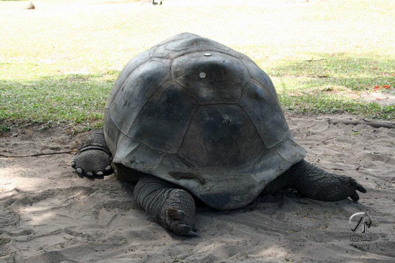А эта черепаха устала. Вы