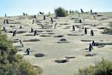 Я уже, вроде, когда-то говорила, что никогда не была сильна в географии… Так вот — биология тоже никогда не была моим коньком! Поэтому в своем блаженном неведении я рисовала себе жилище среднестатистического пингвина — где-нибудь в пещерке на льдине, за камушком на пляже или на худой конец — в трещине какой-нибудь скалы! Магелланские пингвины разрушили мои иллюзии, даже глазом не моргнув! ;)