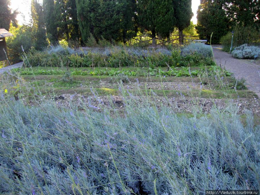 Это огород с лекарственными травами