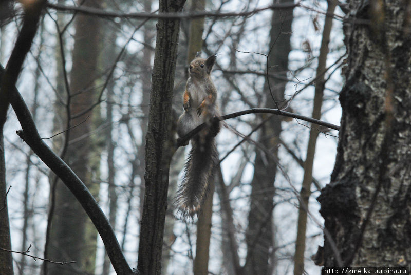 В парке живут и белки. Их как минимум трое, почти всегда, если уйти в лесную часть, то можно встретить белку или даже несколько. Для них тоже висят кормушки.