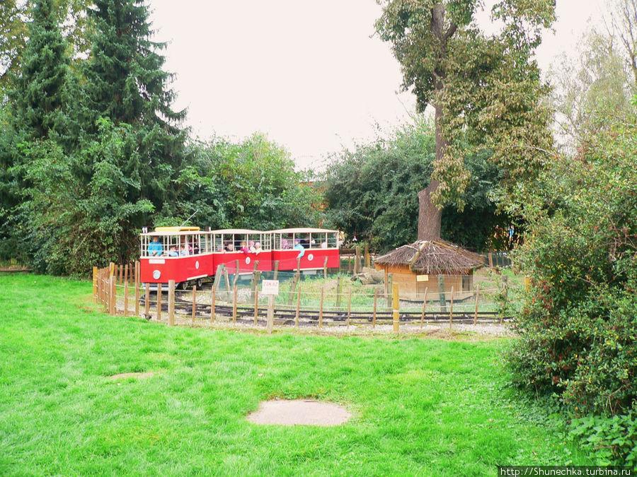 Детский поезд в зоопарке