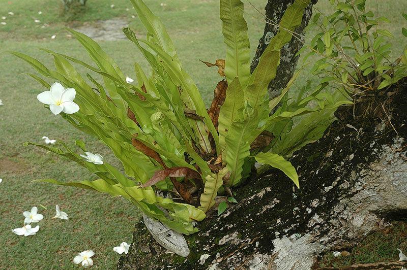 Орхидеи с цветком магнолии на них