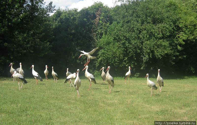 Птицы слетаются на место кормежки