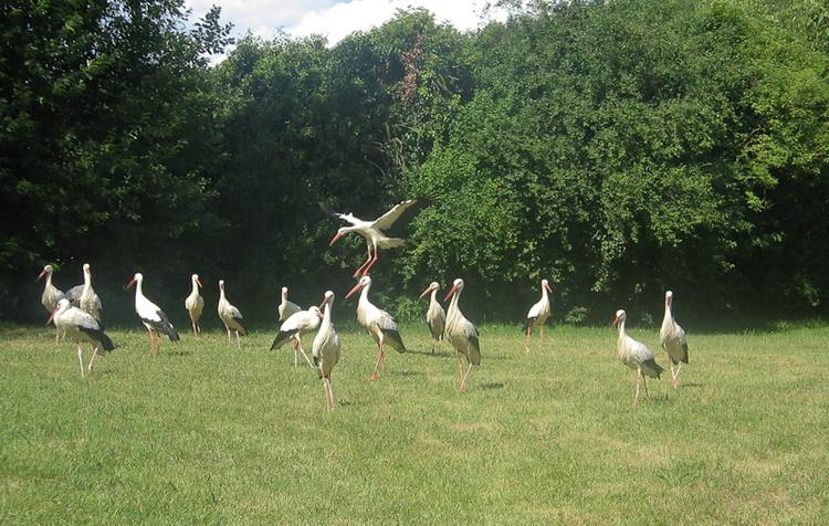 Птицы слетаются на место