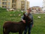 Встреча рядом с домом уже со знакомым осликом.