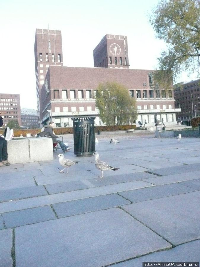 а вот и ратуша