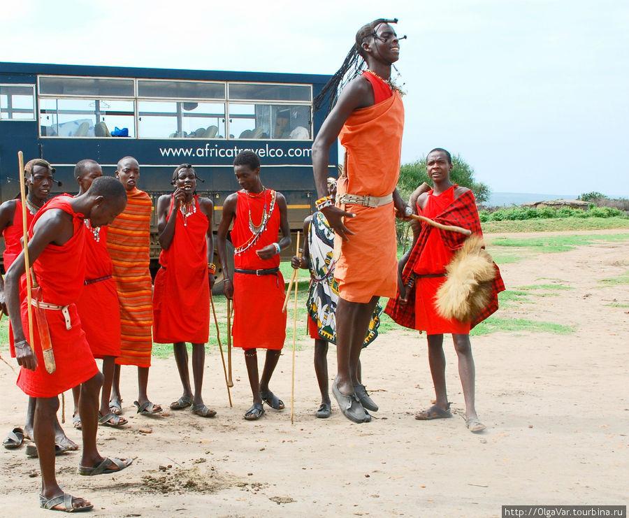 Прыгают масаи с места, не