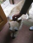 Местный пес :)