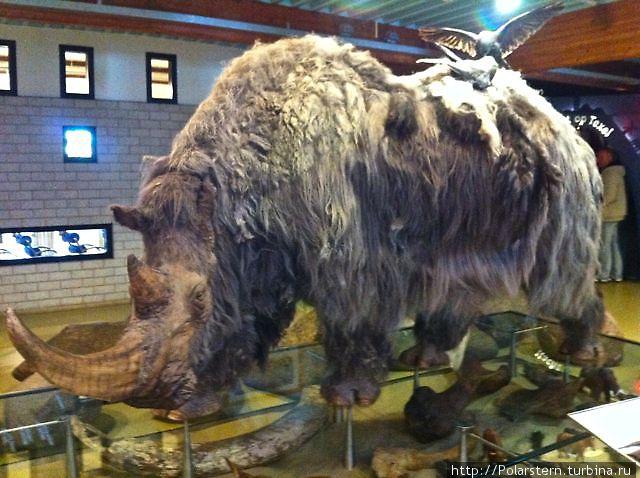 Древние животные на экспозиции в музее