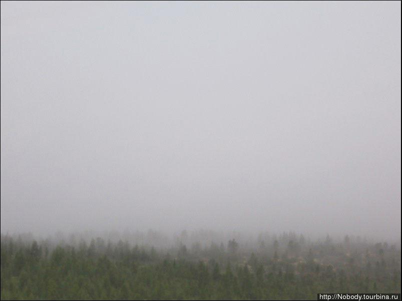 Лес в тумане...