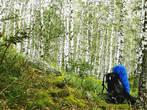 Башкирский березовый лес