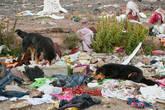 Собаки — поедатели трупов