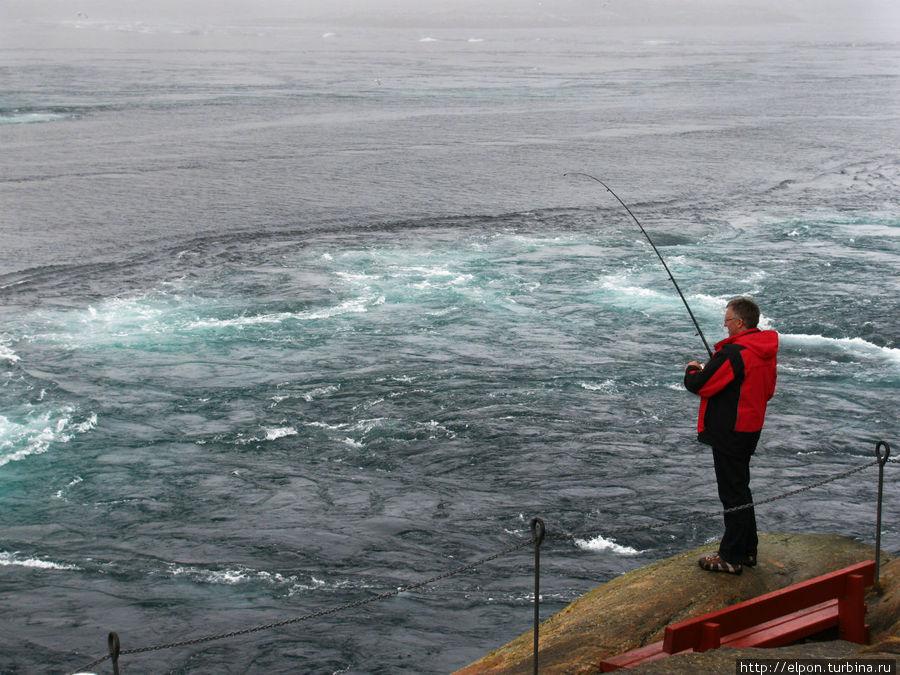 Водный поток приносит огромное количество планктона и мелких рыбешек, которые становятся приманкой для более крупных пород: трески, сайды, палтуса. В путеводителе написано, что Сальтстраумен – настоящий рай для рыбаков, и именно здесь была поймана самая большая сайда в мире – 22,7 кг.