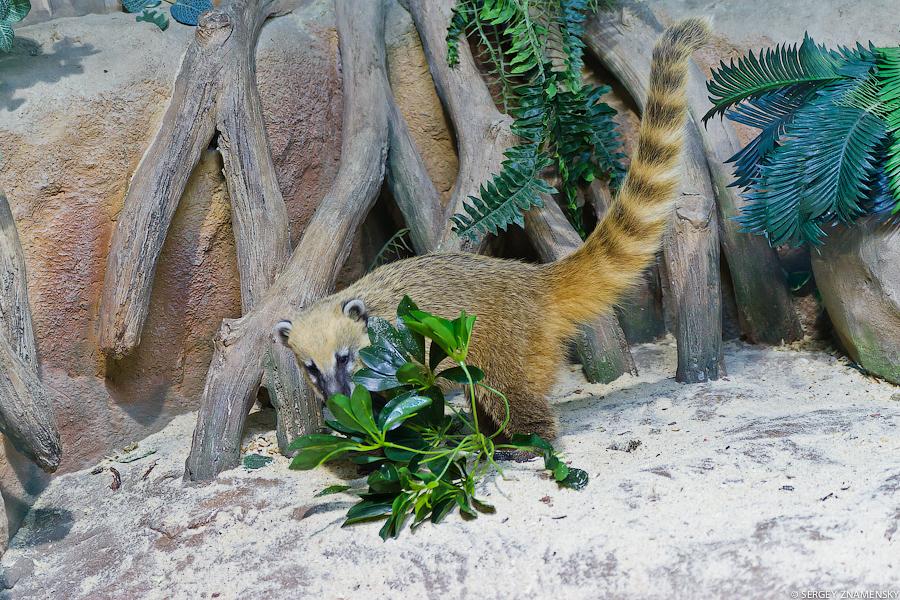 Или вот эти милые подвижные зверьки (названия их я не запомнил):