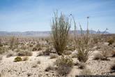 В пустыне я оказался второй раз в жизни, и, надо сказать, мне там не нравится. Жарко, однообразно, откровенно нечем заняться.