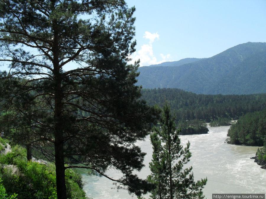 Вид на Катунь с Чемальской тропы.