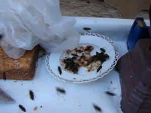 Мухи и пчёлы сопроводят ваше питание