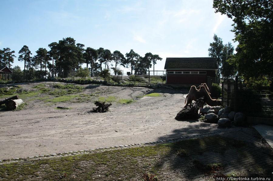 Территория вольеров действительно несоизмерима с размерами в наших русских зоопарках..
