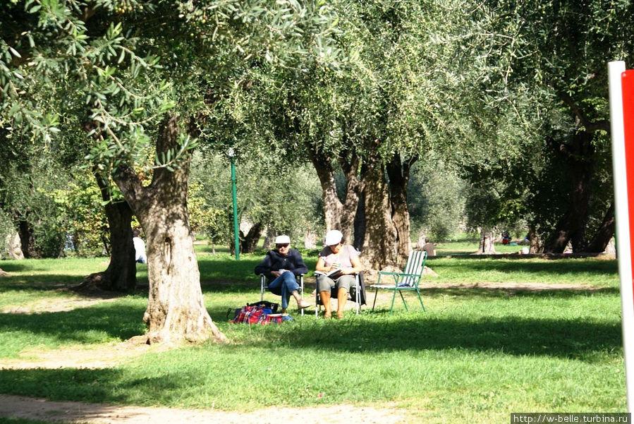 В тени олив отдыхают люди.