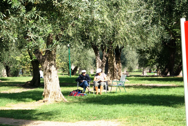 В тени олив отдыхают люди